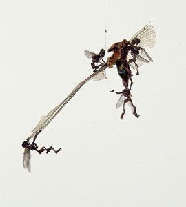 Tessa Farmer Swarm (detail) 2004